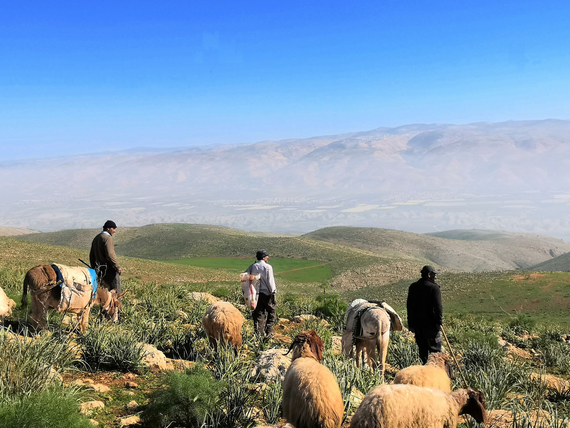 Palestinian shepherds with their sheep on a hillside in the Jordan Valley